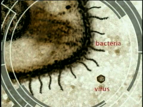 Superbugs: The Killer Viruses